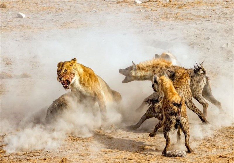 انحصار طلب؛ عکس روز نشنال جئوگرافیک