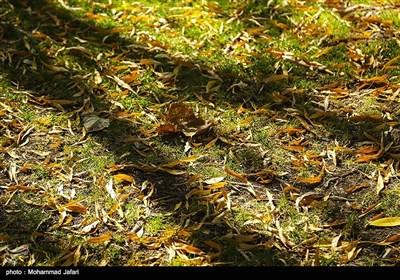 پاییز در زنجان