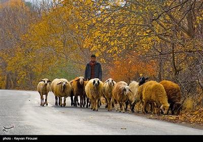 طبیعت پاییزی روستای نران - کردستان