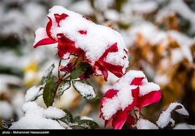 طهران تکتسی بحلة خریفیة بیضاء