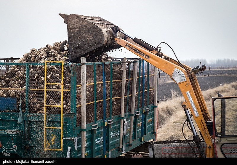 سوءاستفاده کارخانجات قند از چغندرکاران؛ کشاورز نمیتواند با قیمت سال ۹۶ تولید خود را ادامه دهد