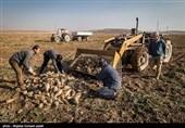 مشکلات تمام نشدنی چغندرکاران آذربایجان غربی از کاشت تا برداشت
