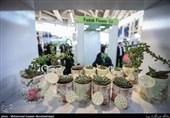 اصلاح سبکزندگی مهمتر از مصرف گیاه دارویی/اثر متفاوت سیر شمال و جنوب ایران