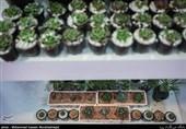 100 هزار هکتار باغ آبی در کشور احداث میشود