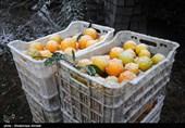 620 هزار تن محصولات باغی در استان قزوین تولید میشود