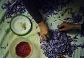 خرید تضمینی زعفران باید امنیت صادرکننده را تأمین کند