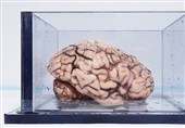 مغز 1