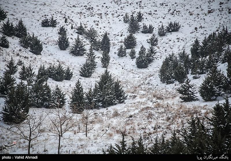تهران پس از بارش برف
