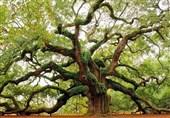 عجیبترین درختان دنیا