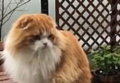 واکنش گربه با مشاهده دانههای برف