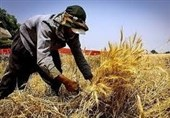 فارس| زخم بیکاری بر چهره روستاهای فارس؛ وامهای اشتغالزایی گرهگشا میشوند؟