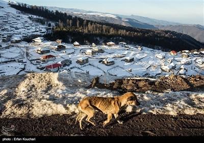 ایران کے صوبے گیلان کے ٹھنڈے اور خوشگوار علاقوں کی چند تصاویر