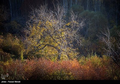 پاییز در کرمانشاه