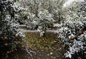 سرما به کشاورزی گلستان
