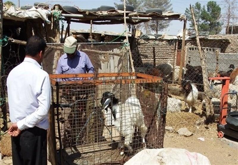 معاون استاندار کهگیلویه و بویراحمد: کشتارگاه یاسوج فقط از میدان عرضه دام خریداری کند