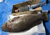 ماهی عظیم الجثه