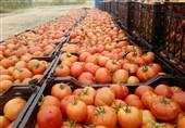 تاثیر شگفت انگیز گوجه فرنگی در مقابله با سرطان!