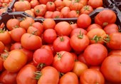قیمت گوجه فرنگی در بازار استان بوشهر کاهش مییابد