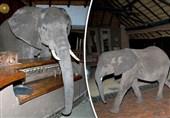 فیل در هتل