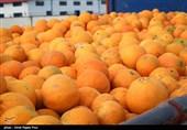 ازدحام میوه داران رودسر برای خرید پرتغال