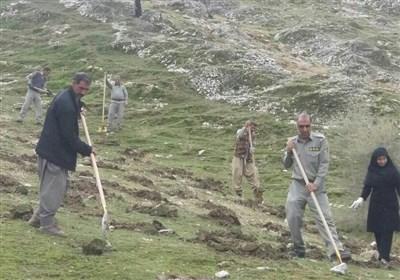 1800 هکتار توسعه جنگل در استان همدان انجام شد