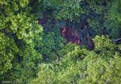 تصاویر هوایی از بومیان آمازون