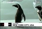 بازدید پنگوئنها