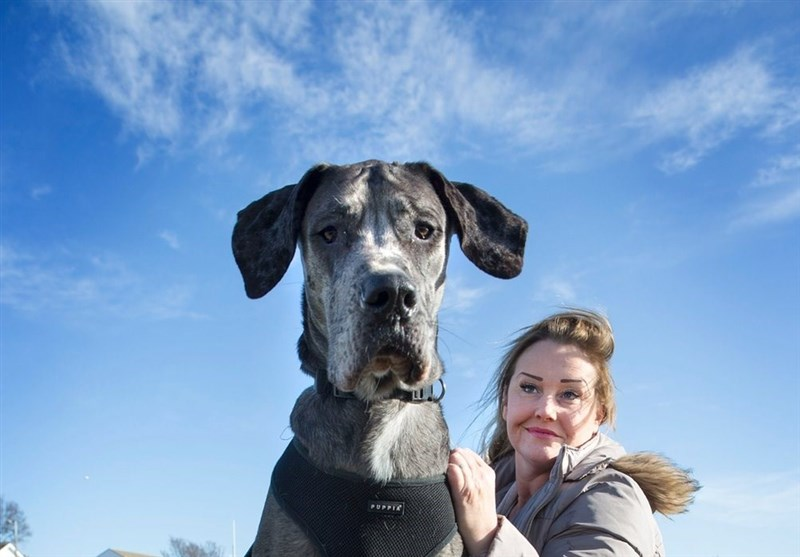 حکم شرعی نگهداری سگهای خانگی یا زینتی در خانه