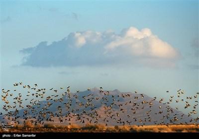 الطیور المهاجرة فی محافظة فارس الایرانیة