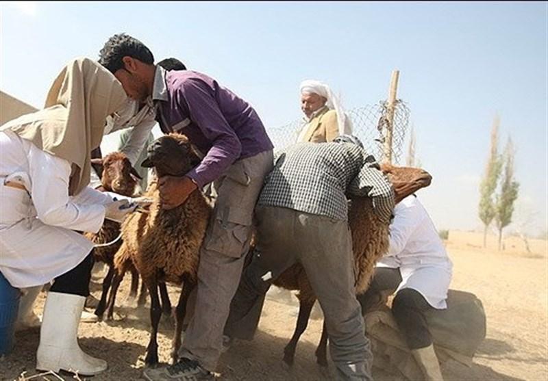 خدمات دامپزشکی در روستاها منجربه پایداری تولید میشود