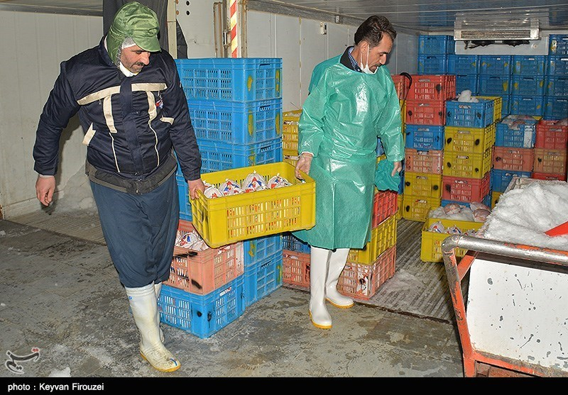Iran Culls Millions of Chickens to Curb Bird Flu: Official