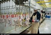 1000 میلیارد تومان در صنعت مرغ کردستان سرمایهگذاری شده است