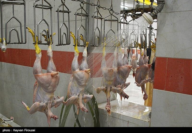 پایتختنشینان قیمت مرغ اصفهان را افزایش دادند/ فروش مرغ 8980 تومانی در اصفهان کذب است