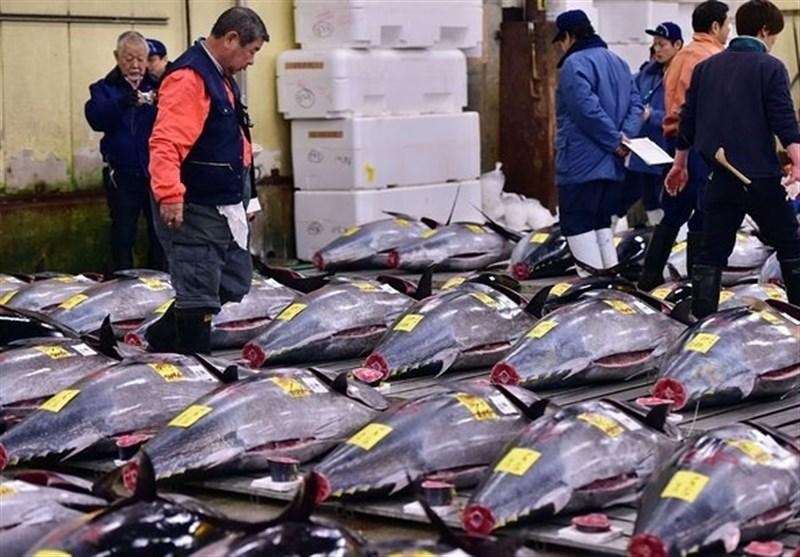 قیمت کنسرو ماهی تن با آغاز فصل برداشت ارزان میشود