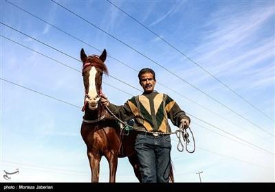 بطولة ایران لسباق الخیول فی مدینة أهواز