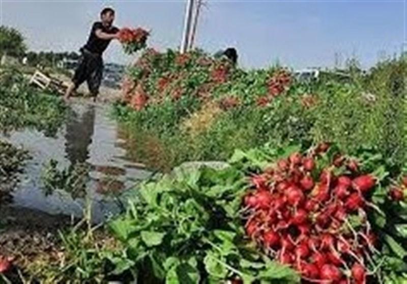 آبیاری مزارع با فاضلاب