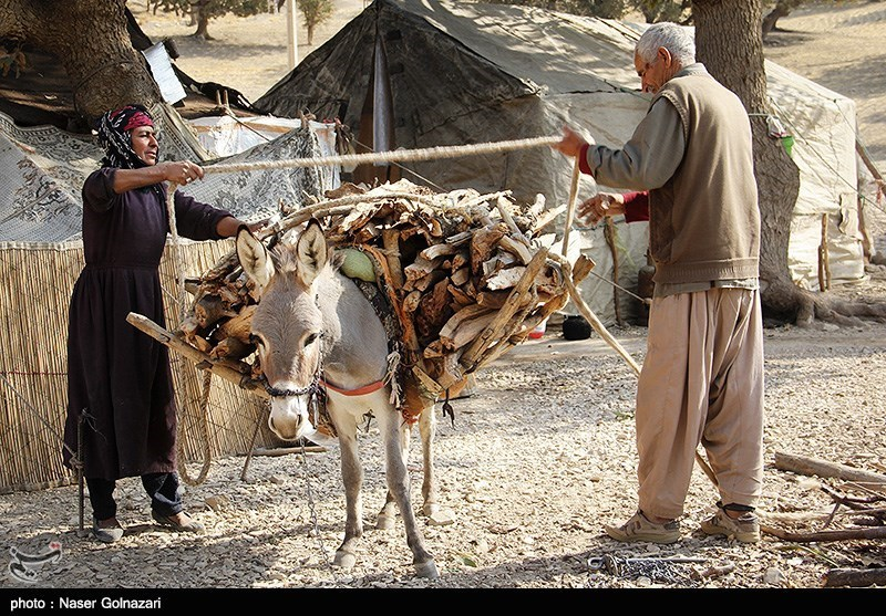 2500 خانوار عشایر امسال وارد استان همدان میشوند