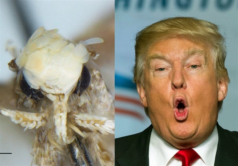"""کندی یسمی """"حشرة"""" تیمنا بـ ترامب"""
