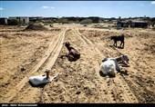 خراسانرضوی| خسارت جبرانناپذیر سیل به باغات و مزارع، کشاورزان «چاپشلو» درگز را خانهنشین کرد