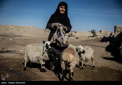 اهالی روستای مرزی تپه کنیز اغلب به دامپروری مشغول هستند مشکل عمده آنان بجز خشک سالی، عدم اجازه بی دردسر ورود به خاک افغانستان برای چرای دام هایشان است ، در خاک افغانستان مرتع های خوبی برای چرای دام وجود دارد