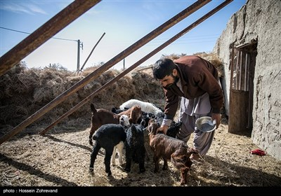 """عزیزالله لکه بادوری می گوید"""" قبلا شغل اصلی اش صیادی بوده است اما بخاطر خشک سالی یک سالی است دام داری می کند به گفته او در گذشته در روستای گله بچه 200 خانواده زندگی می کردند اما اکثرا مهاجرت کردن و حدودا 30 خانواده باقی مانده اند"""