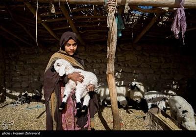 دختری یک بره را در بغل گرفته روستای گله بچه، قبل از خشکسالی و خشک شدن هیرمند شغل اصلی آنها صیادی بود