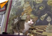 فیلم/گربهای که ریاضی بلد است