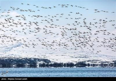 روز جهانی تالاب ها - تالاب حسنلو در آذربایجان غربی