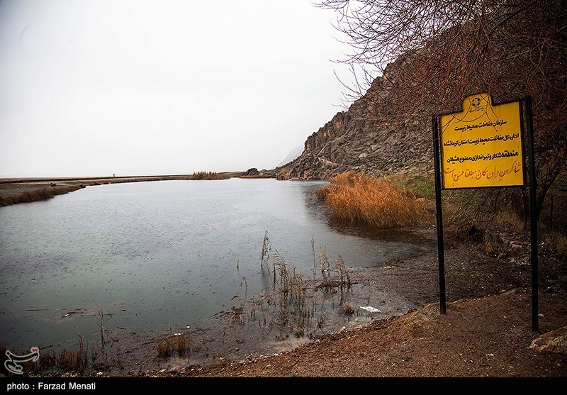 https://newsmedia.tasnimnews.com/Tasnim/Uploaded/Image/1395/11/13/139511131549189699872734.jpg