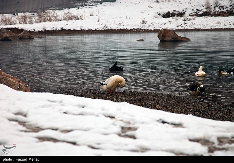 https://newsmedia.tasnimnews.com/Tasnim/Uploaded/Image/1395/11/13/139511131549191739872734.jpg