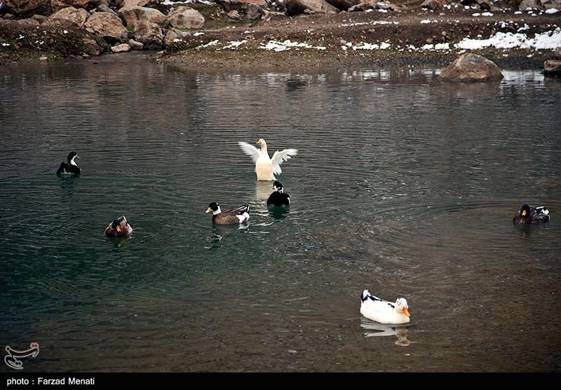 https://newsmedia.tasnimnews.com/Tasnim/Uploaded/Image/1395/11/13/139511131549192519872734.jpg