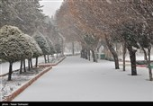 بارش برف در ایلام