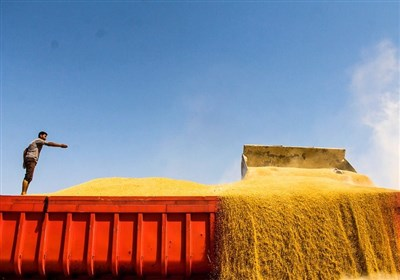 حملونقل گندم در خراسان شمالی ساماندهی میشود