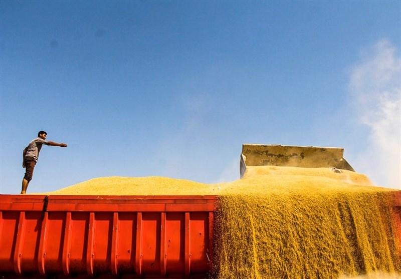 ایران 35 هزار تن گندم به عمان فروخت